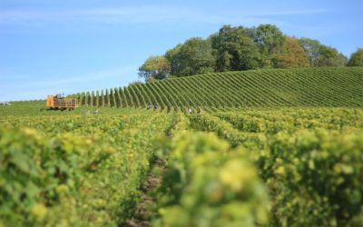 5 of the best wineries in Amador County