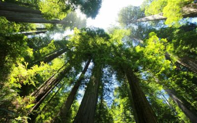 The best places to go hiking in Amador County